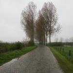 Raro esemplare di sanpietrini olandesi