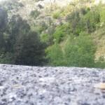gamberi d'altura
