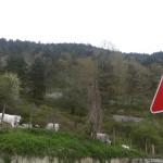 Bovini e cartelli bovini