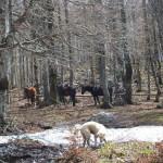 La neve di maggio a Forca d'Acero