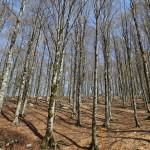 Il bosco al valico di Forca d'Acero