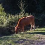 vitelli tonnati