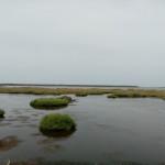 Fenicotteri nello stagno di Oristano